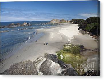 Jessie Honeyman Memorial State Park Canvas Print by Peter French