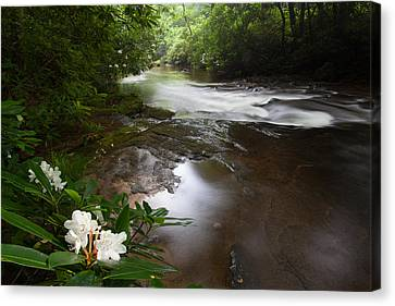 Jewels Of The Davidson River Canvas Print by Rob Travis