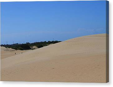 Jockey's Ridge 13 Canvas Print by Cathy Lindsey