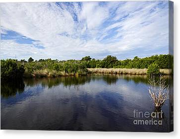 Joe Fox Fine Art - Flooded Grasslands And Mangrove Forest In The Canvas Print by Joe Fox