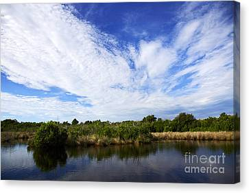 Joe Fox Fine Art - Flooded Grasslands With Mangrove Forest In The Background In The Florida Everglades Us Canvas Print by Joe Fox
