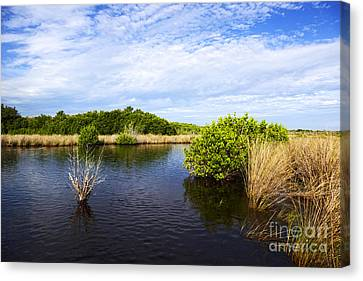 Joe Fox Fine Art - Flooded Grasslands With Mangrove Forest In The Background In The Florida Everglades Usa Canvas Print by Joe Fox