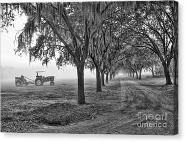 John Deer Tractor And The Avenue Of Oaks Canvas Print by Scott Hansen