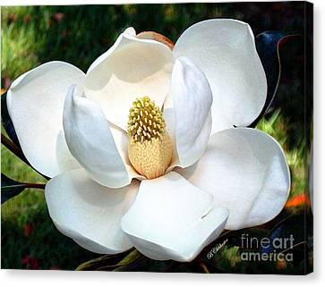 John's Magnolia Canvas Print by Barbara Chichester