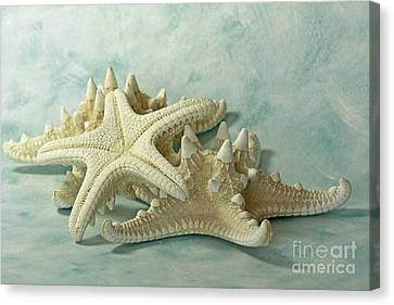 Journey To The Sea Starfish Canvas Print by Inspired Nature Photography Fine Art Photography