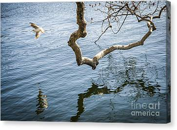 Joy Of Freedom Canvas Print by Ning Mosberger-Tang