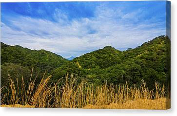 Jungle Canvas Print by Aged Pixel