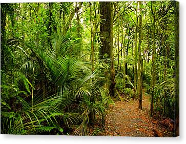 Jungle Scene Canvas Print by Les Cunliffe