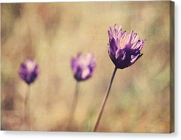 Just A Breath Away Canvas Print by Laurie Search