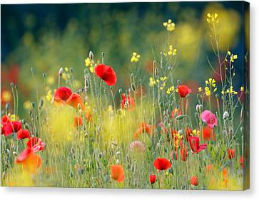 Just A Perfect Day Canvas Print by Roeselien Raimond