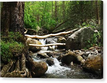 Just Outside Of Gatlinburg Canvas Print by Mountain Dreams