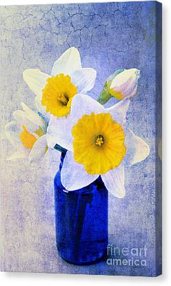 Just Plain Daffy 2 In Blue - Flora - Spring - Daffodil - Narcissus - Jonquil  Canvas Print by Andee Design