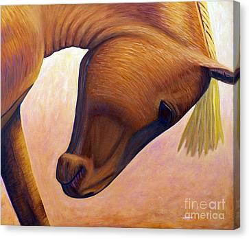 Just Plain Horse Sense Canvas Print by Brian  Commerford