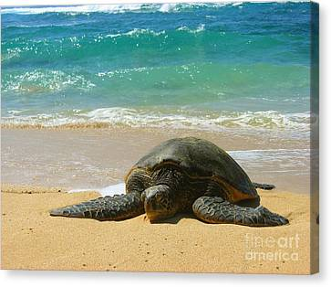 Just Resting Canvas Print by Christine Stack