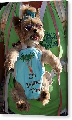 Key West Dog Canvas Print by Bob Slitzan