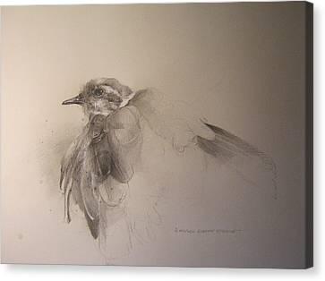 Killdeer Canvas Print by Darryl Steele