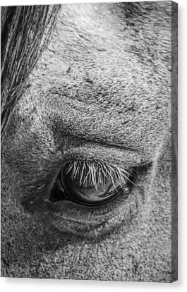 Kind Eye Canvas Print by Dianne Arrigoni