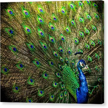 King Of Birds Canvas Print by Karen Wiles