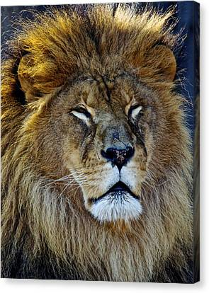 King Of The Beasts Canvas Print by Frozen in Time Fine Art Photography