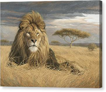 King Of The Pride Canvas Print by Lucie Bilodeau