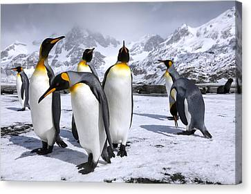 Kings At Right Whale Bay Canvas Print by Oliver Prince