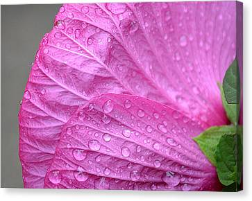 Kissing Pink Canvas Print by Michelle Ayn Potter