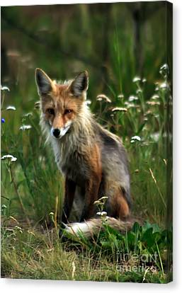 Kit Red Fox Canvas Print by Robert Bales