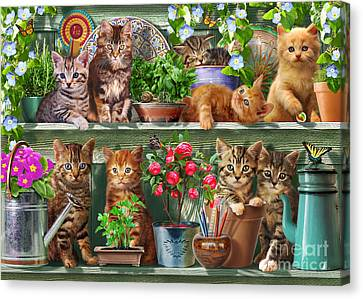 Kitchen Cats Canvas Print by Adrian Chesterman