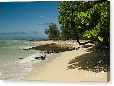 Kite Beach Kanaha Beach Maui Hawaii Canvas Print by Sharon Mau