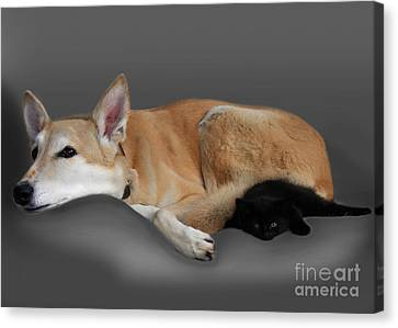 Kitten And Canine Canvas Print by Linsey Williams