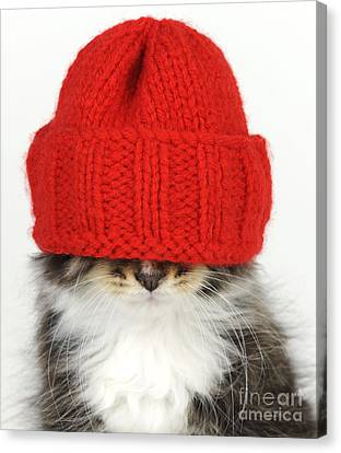 Kitten In A Hat Canvas Print by John Daniels