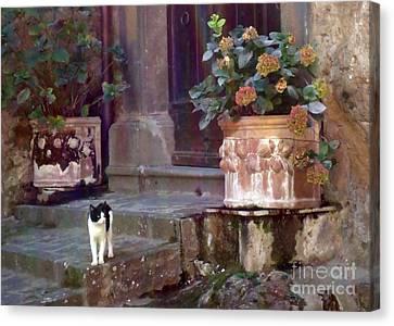 Kitten Italiano Canvas Print by Barbie Corbett-Newmin