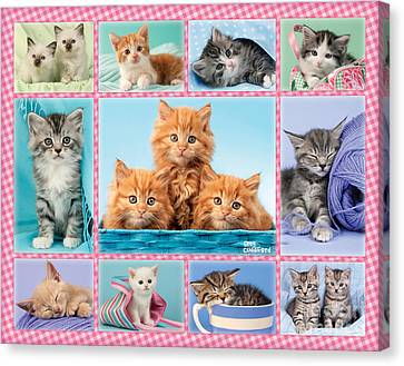 Kittens Gingham Multi-pic Canvas Print by Greg Cuddiford