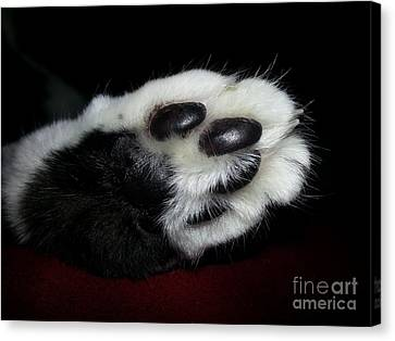 Kitty Toe Beans Canvas Print by Heather L Wright
