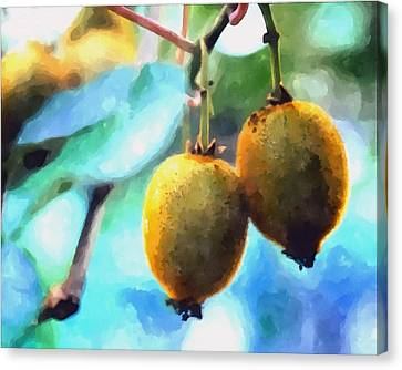 Kiwi Fruit Ripening On A Tree Canvas Print by Lanjee Chee