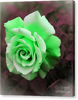 Kiwi Lime Rose Canvas Print by Barbara Griffin