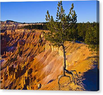 Know Your Roots - Bryce Canyon Canvas Print by Jon Berghoff