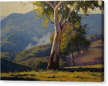 Koala In The Tree Canvas Print by Graham Gercken