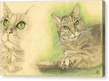 Kobi Study Canvas Print by Marcianna Howard