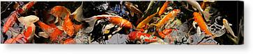 Koi Carp Canvas Print by Panoramic Images