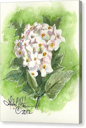 Korean Balm Canvas Print by Linda L Martin
