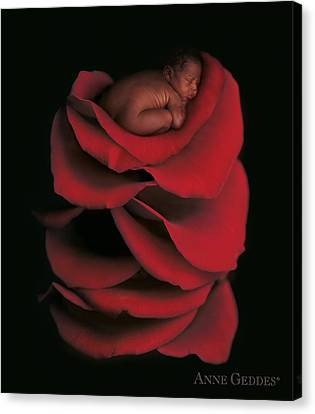 Kwasi In Rose Canvas Print by Anne Geddes