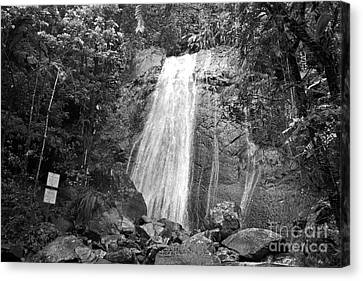 La Coca Falls El Yunque National Rainforest Puerto Rico Print Black And White Canvas Print by Shawn O'Brien