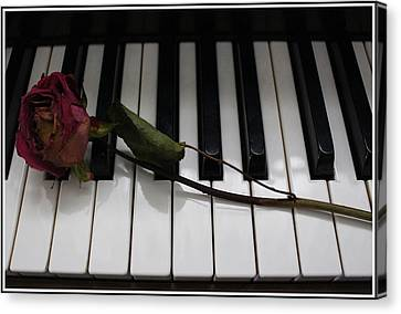 La Vie En Rose - A Love Song  Canvas Print by Dora Sofia Caputo Photographic Art and Design