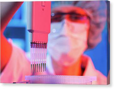 Lab Technician Holding Multi Pipettes Canvas Print by Wladimir Bulgar