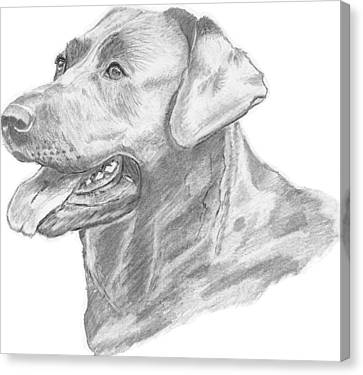Labrador Dog Drawing Canvas Print by Catherine Roberts