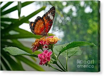 Lacewing Butterfly Canvas Print by Karen Adams