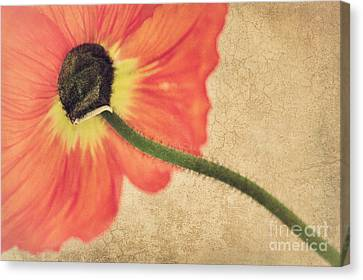 Lady Poppy Canvas Print by Angela Doelling AD DESIGN Photo and PhotoArt