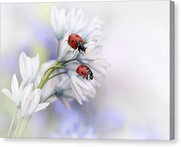 Ladybirds Canvas Print by Ellen Van Deelen