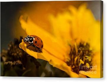 Ladybug Canvas Print by Nicole Markmann Nelson